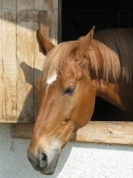 horse-1094937_1920